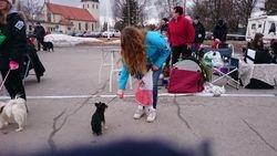 Junior med Hund
