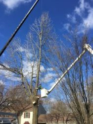 Tree Removal West Chester PA