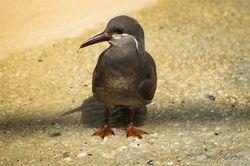 Watvogel