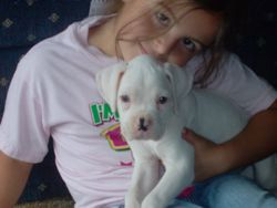 Sydney and white puppy