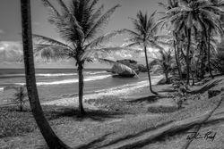 Barbados BW