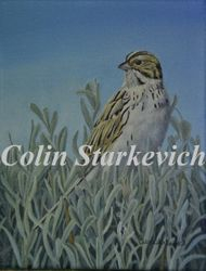 "Amongst the Sage - Baird's Sparrow (7 by 9"" oil on canvas) $200.00"