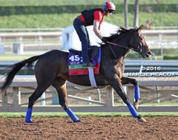 Miss Temple City Gallops