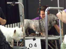 "Brisbane Royal ""Ekka"" Show, August 2012"