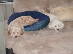 Bailey and Dexter all played out!