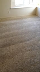 Rotary RX-20 carpet cleaning