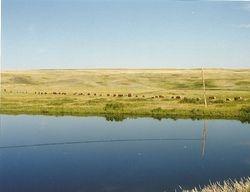 Pasture along Swift Current Creek