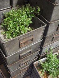 #14/091 50 Sq. Metal Boxes