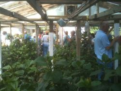 Inside Barrys greenhouse-photo by the Gores