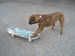 Skater Tessa
