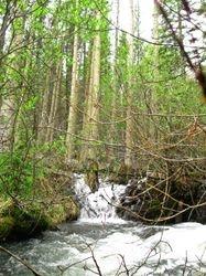 Aspen River