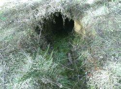 2008 A wombat hole