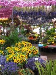 Amsterdam Flower Stall