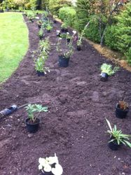 Positioning plants in the long border