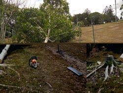 Tree Felled 1
