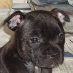 Skyy Puppy