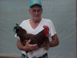 Bob holding one of our Rhode Island Red Roosters