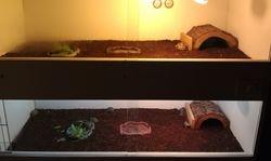Hatchling Enclosure