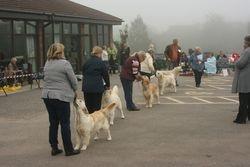 Novice Dog Line Up