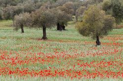 Extremadura (spanje)