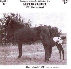 Go Latigo and Miss Bar Heels