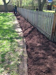 After Clean-up and mulched