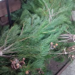 White Pine Boughs, 7.99