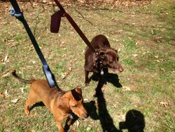 Dudley and Hershey