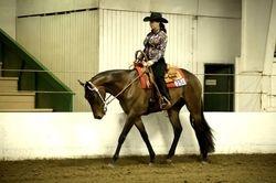 Tally Western Jr. Horse