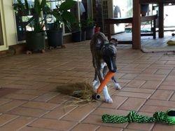 Muffy & carrot