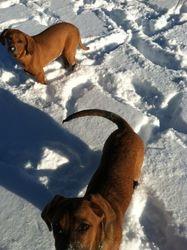 Suzie & Bertie FKA Pound Puppies