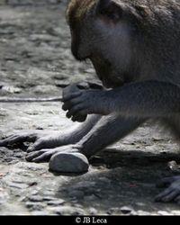 pound in stone (Ubud)