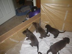 Puppies growing