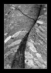 Curved Bark