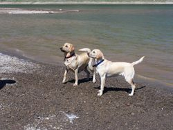 Sunny and 6-month-old Tess at Ridgway Reservoir