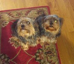 Dixie & Zuzu