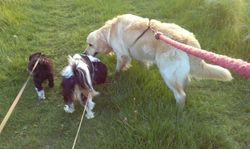 Walk with Lennon and Marley