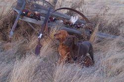 Pheasant Hunting 2006