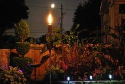 Lindys flower garden nights 2