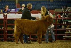 CBS Yaz's Yukon Jill Reserve Grand Champion Heifer