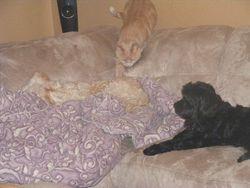 Charlotta likes Jasper's fur!