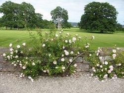 Powderham Castle, Devon - Rose garden & Deer Park