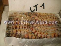 Shrimps Senegal