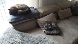 Willi & Theo