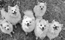 Good dogs