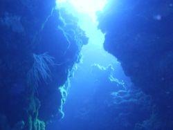 crack diving