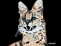 MALAWI - 'Small Cat BIG Attitude'