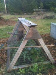 Chicken Tractor protecting Broccoli