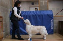 Class 9 No.128 Graduate Dog