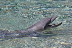 Dolphin talking to a trainer